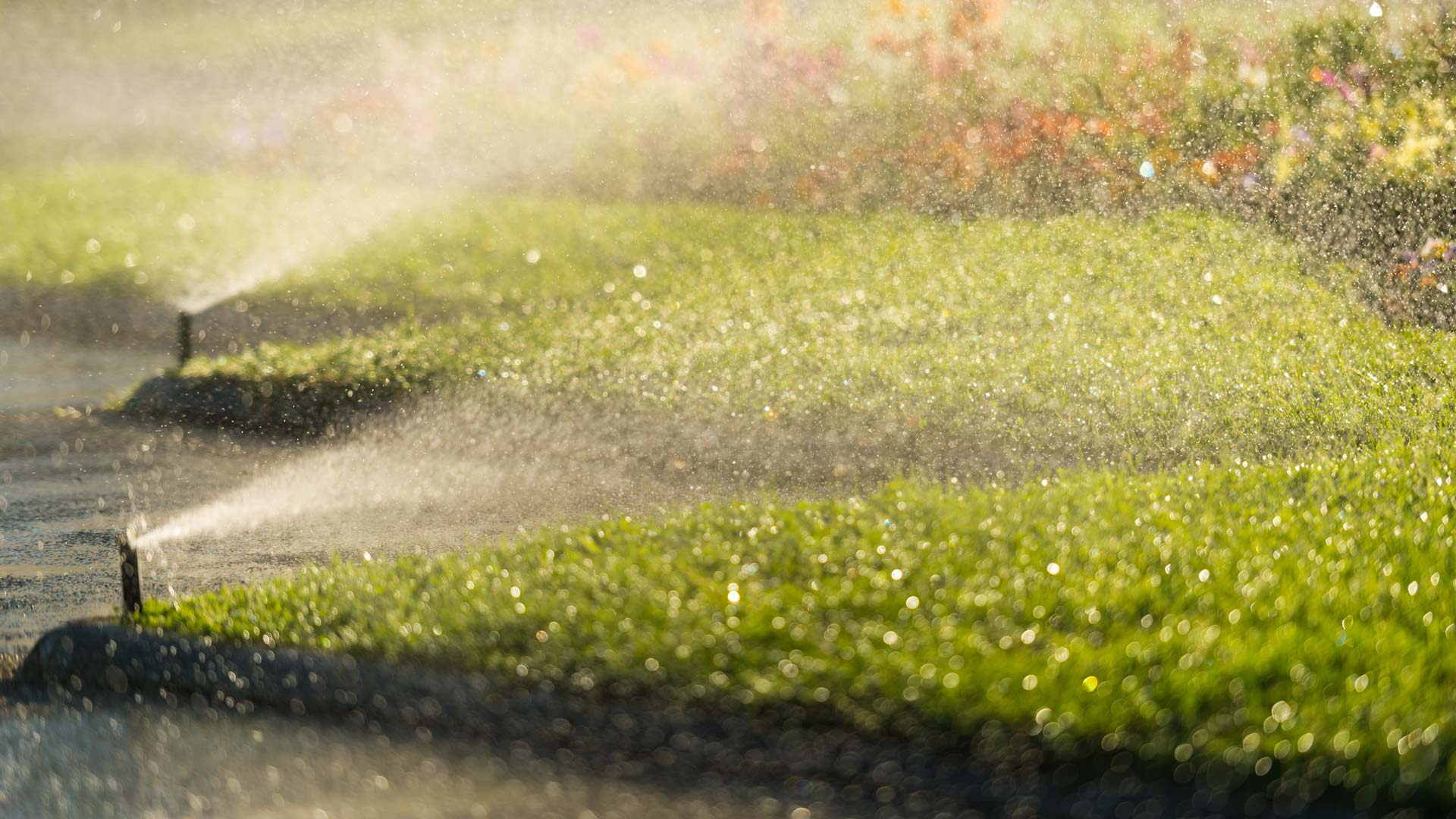 Close up of our clients irrigation system watering the lawn.