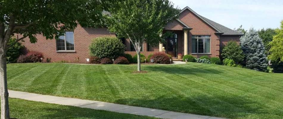 A lawn that was recently mowed with grass stripping at a home in Lincoln.